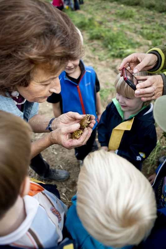 … auch tierische Gäste besuchten die Kinder bei ihrer Ernte auf dem Acker.